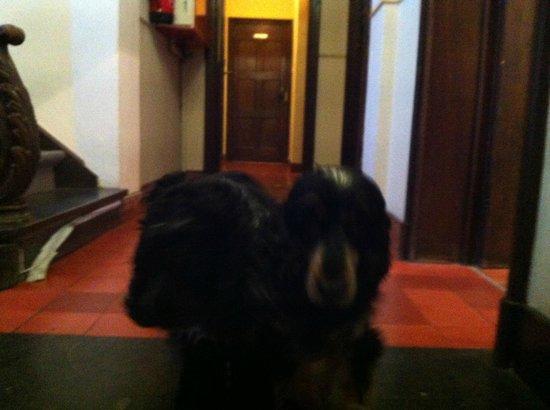 Hotel Egmond : Two puppy dogs