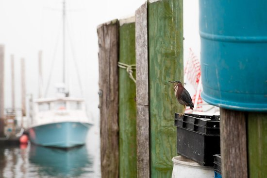 The Break : Nearby Galilee is a New England ocean fishing destination