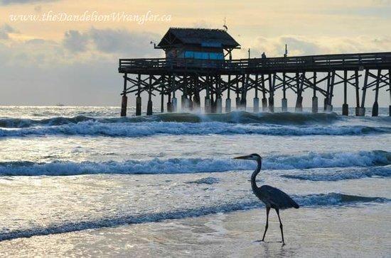 La Quinta Inn & Suites Cocoa Beach Oceanfront: Gorgeous beach!