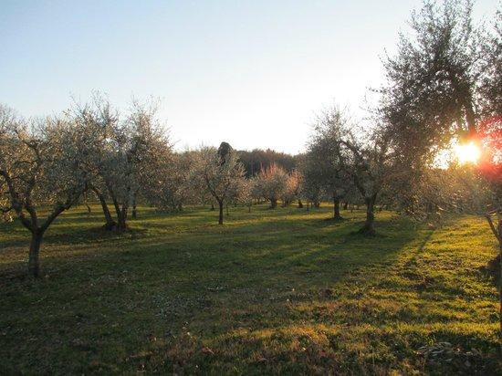 Agriturismo Molinuzzo: Field