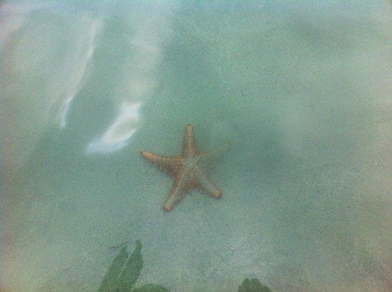 Hotel Oasis: Las estrellas de mar suelen verse desde el muelle