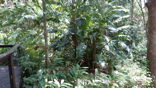 Songbirds Rainforest Retreat: Tranquility