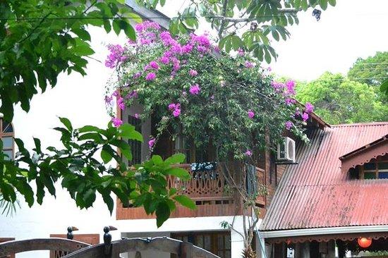 The Lotus Garden: Lotus Garden