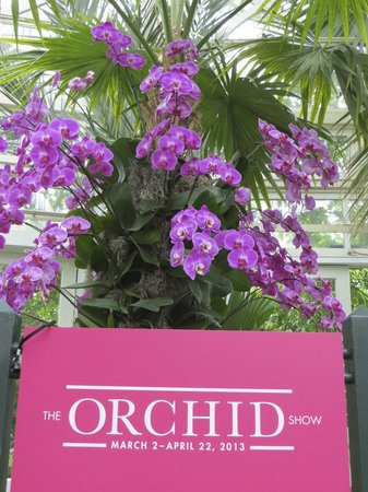 New York Botanical Garden : 2013 Orchid Show