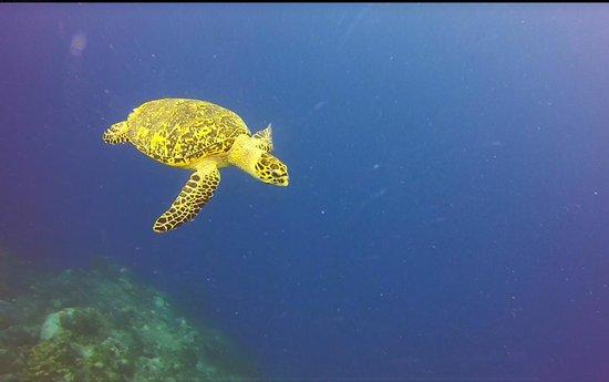 Aqua Scuba Belize: Half Moon Caye
