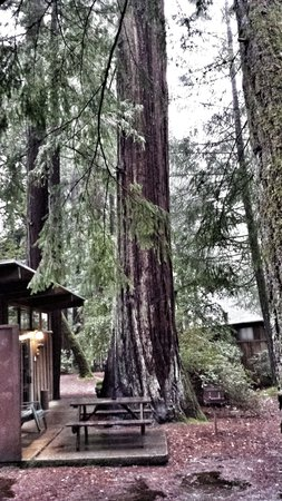 Redwoods River Resort & Campground : perfection