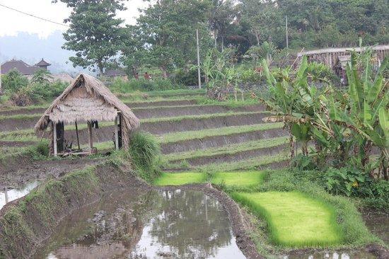 Abian Ayu Villa: arround villa