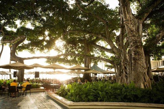 Moana Surfrider, A Westin Resort & Spa : The Banyan Courtyard at sunset - magical!