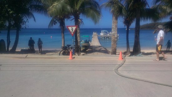 Coconut Tree Divers: Doc right across the street from the shop