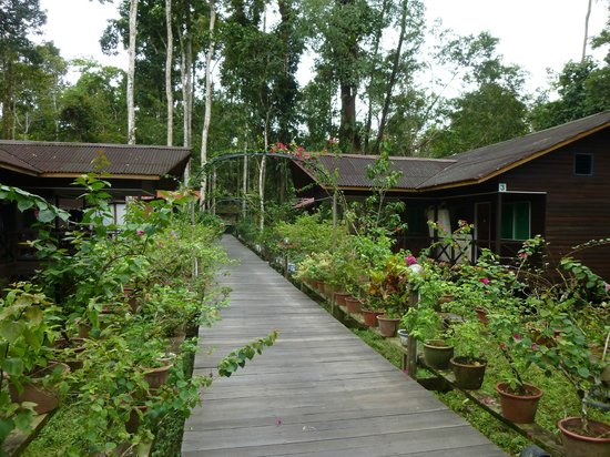 Abai Jungle Lodge: Boardwalk between the rooms and the jungle