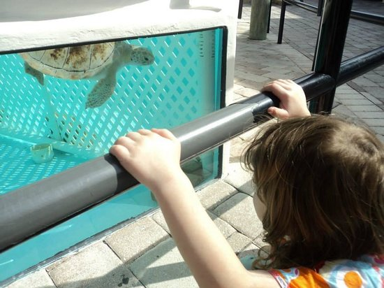 Loggerhead Marinelife Center: View turtles in their tanks