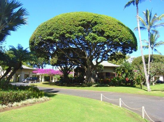The Ritz-Carlton, Kapalua : Entryway