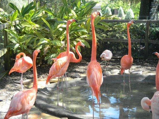 Busch Gardens : Розовые фламинго