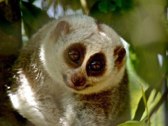 Wildlife Friends of Thailand: Ok, I'm up now