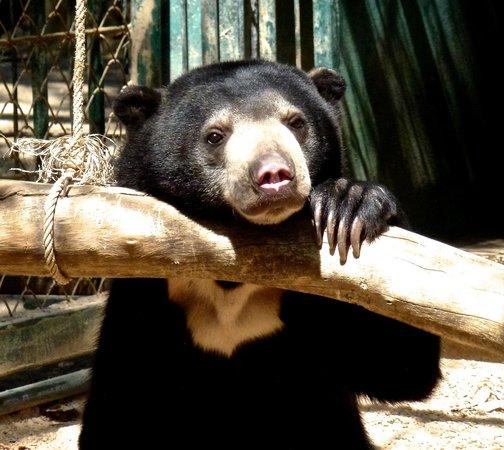 Laid back - Bild von Wildlife Friends of Thailand, Tha ...