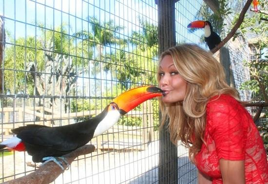 Zoological Wildlife Foundation: toucan sam eating blueberry from my mouth