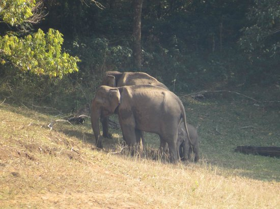 Aranya Nivas KTDC: Elephants in Periyar Forest