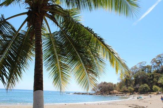 Three Monkeys: Montezuma beach, small one.  close to restaurants and shopping