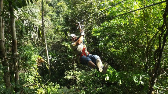 The Zip Lines Canopy : Tarzan
