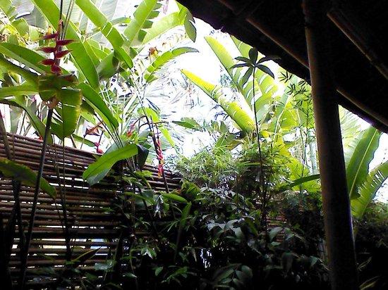 Oasis Resort: environnement