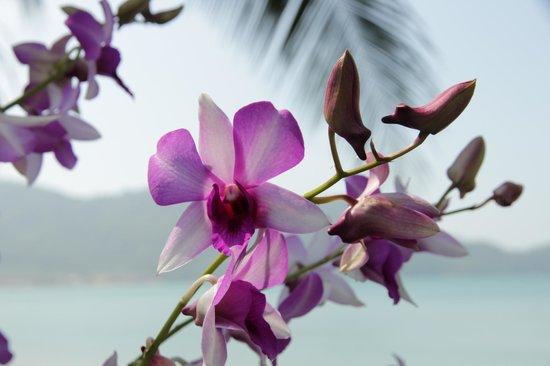 Little Sunshine Boutique Beach Resort & Spa: Herrlicher Garten mit Orchideen