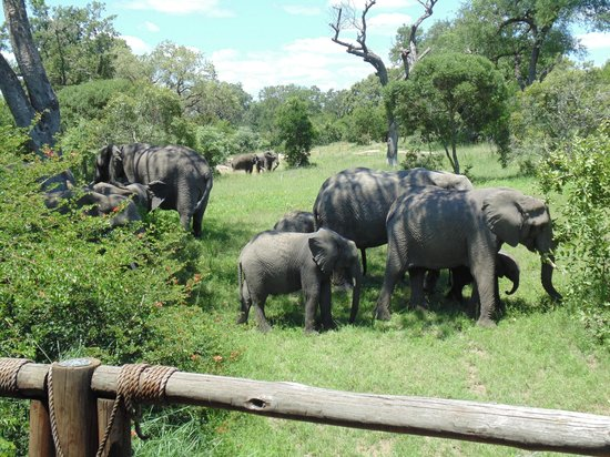 Ulusaba Safari Lodge: Elephants passing