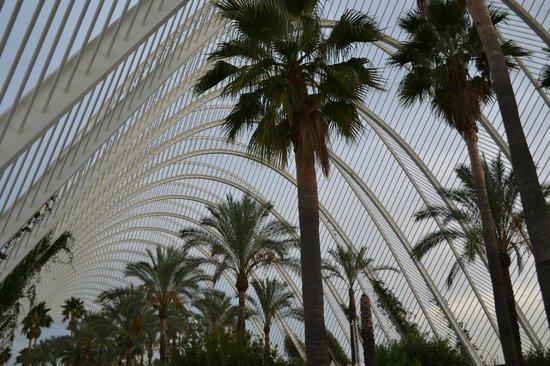 Ciudad de las Artes y las Ciencias: View 9