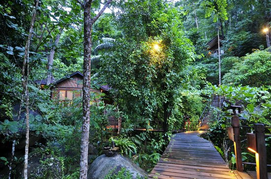 Japamala Resort by Samadhi: Jungle Luxe Sarang