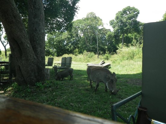 andBeyond Kichwa Tembo Tented Camp: Camp family