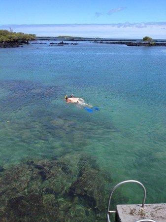 Iguana Crossing: snorkeling Concha Perla2