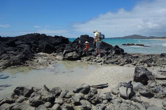 Iguana Crossing: Beachpic3