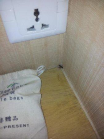 Sunon Holiday Villa: Dead roach