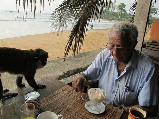 Busua Inn: Une petit singe bien curieux