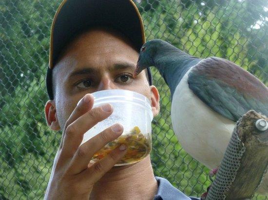 Kiwi Birdlife Park: Bird show