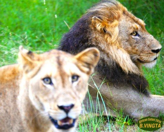 Tydon Safari Camp : The King