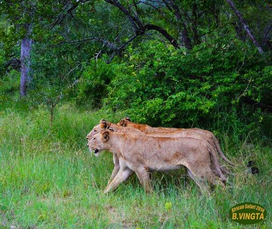 Tydon Safari Camp : Kruger Park