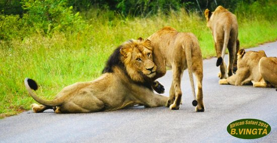 Tydon Safari Camp : Hugs!!!