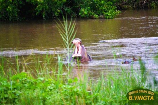 Tydon Safari Camp : Hippo..