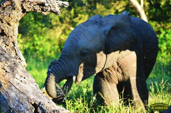 Tydon Safari Camp: Sabi Sands