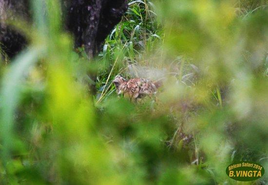 Tydon Safari Camp: Shy Leo