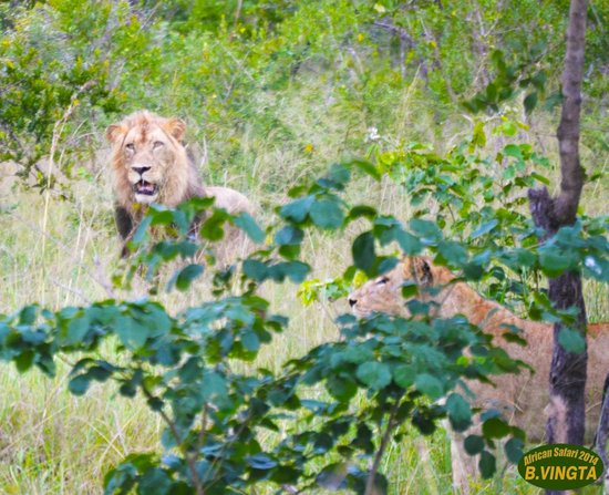 Tydon Safari Camp: The King