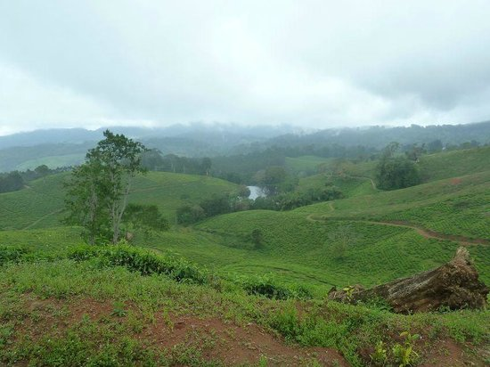 Amani Nature Reserve: piantagione