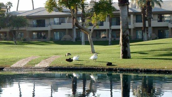 JW Marriott Desert Springs Resort & Spa : More wildlife