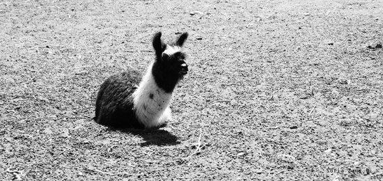 Patio Alto: Llama