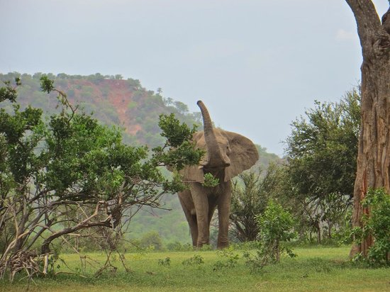 Gonarezhou National Park: One of the park's many elephants