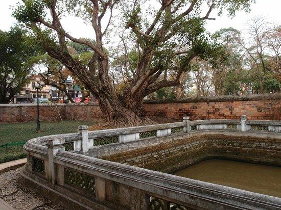 Literaturtempel & Nationale Universität: Lotus pond without lotus