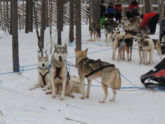 Nellim Wilderness Hotel: Brilliant husky safari