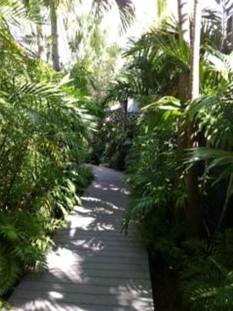The Mermaid & The Alligator: walkway to our cottage