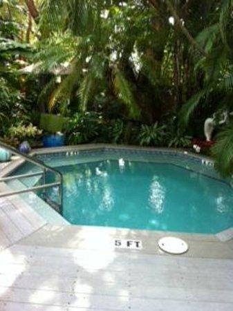 The Mermaid & The Alligator: pool