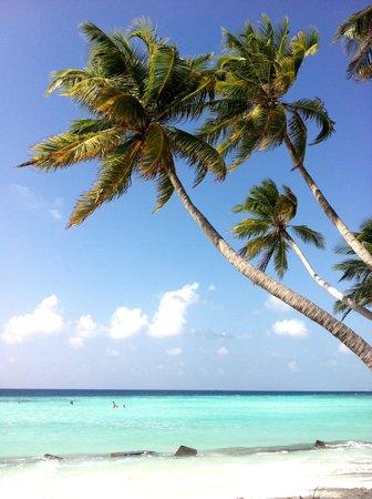 Stingray Beach Inn: Spiaggia a 2 passi dalla guest house (unica per turististi sull'isola)